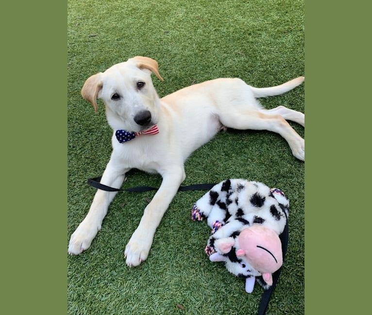 Photo of Bailey, a Siberian Husky, German Shepherd Dog, and Beagle mix in Kentucky, USA