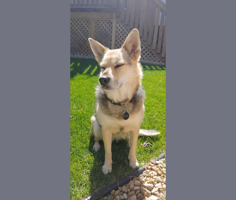 Photo of Macy, an American Village Dog  in Fort Mackay, Alberta, Canada