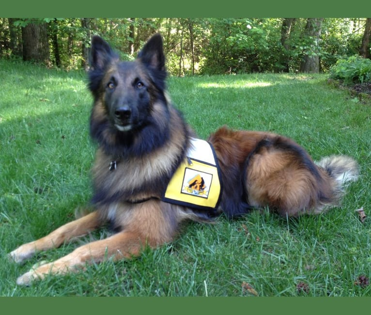 Photo of Ripley, a Belgian Shepherd  in NC, USA