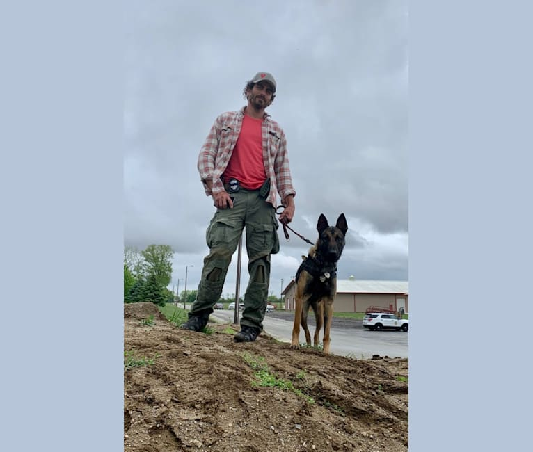 Photo of Pepper, a Dutch Shepherd  in Hulsberg, Netherlands