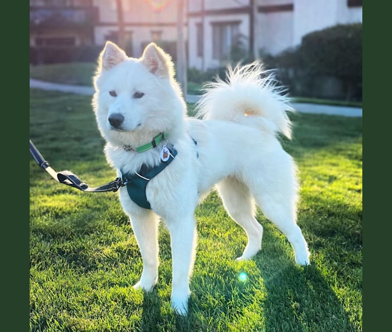 Photo of Haley, a Japanese and Korean Village Dog mix in South Korea