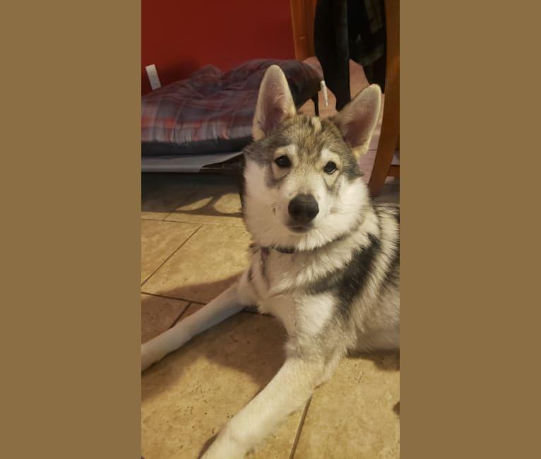 Photo of Miko, a   in Missouri, USA