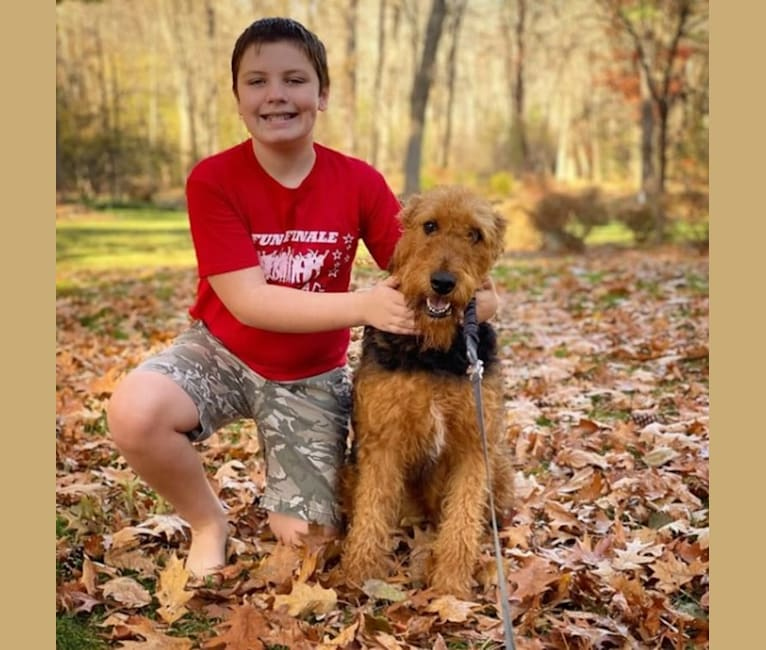 Photo of Maisy, an Airedale Terrier  in Arkansas, USA