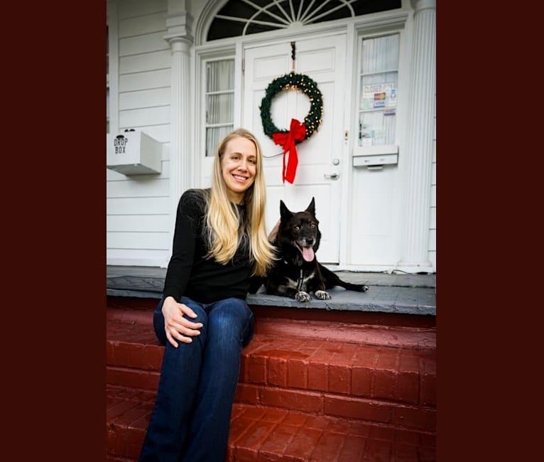 Photo of Fox, a Chow Chow, Australian Cattle Dog, Beagle, Basset Hound, and Golden Retriever mix in Kentucky, USA