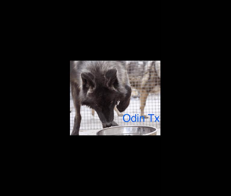 Photo of Odin, a