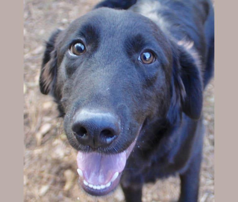 Photo of Aonghus, a Golden Retriever, Labrador Retriever, and Mixed mix in Austin, Texas, USA