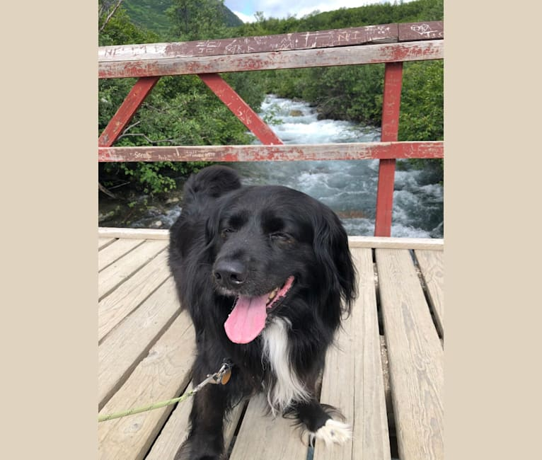 Photo of Beauregard, a Cocker Spaniel, Mountain Cur, Alaskan Malamute, Border Collie, and Mixed mix in Delta Junction, AK, USA
