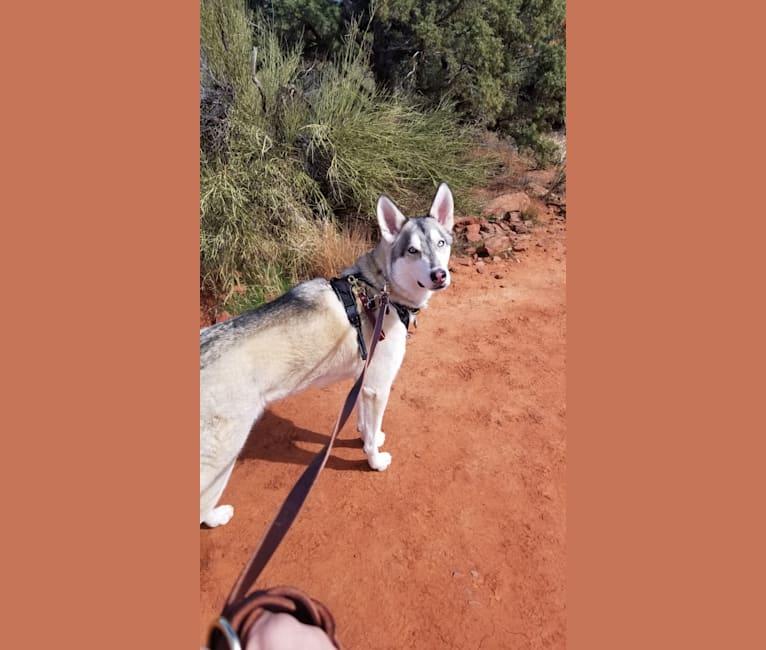 Photo of Loki, a   in Clarkdale, AZ, USA