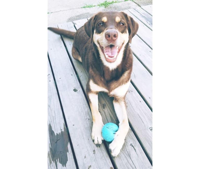 Photo of Kuemper, a Labrador Retriever, Golden Retriever, Border Collie, German Shepherd Dog, and English Springer Spaniel mix in Minnesota, USA
