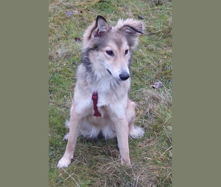 Photo of Alicia, an Eastern European Village Dog  in Romania