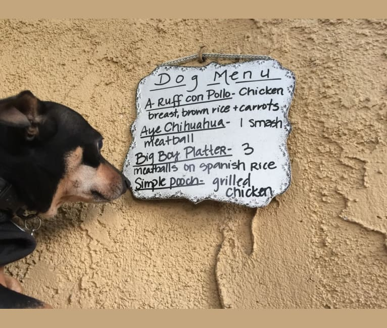 Photo of Bailey, a Chihuahua, Yorkshire Terrier, and Mixed mix in South Pasadena, California, USA