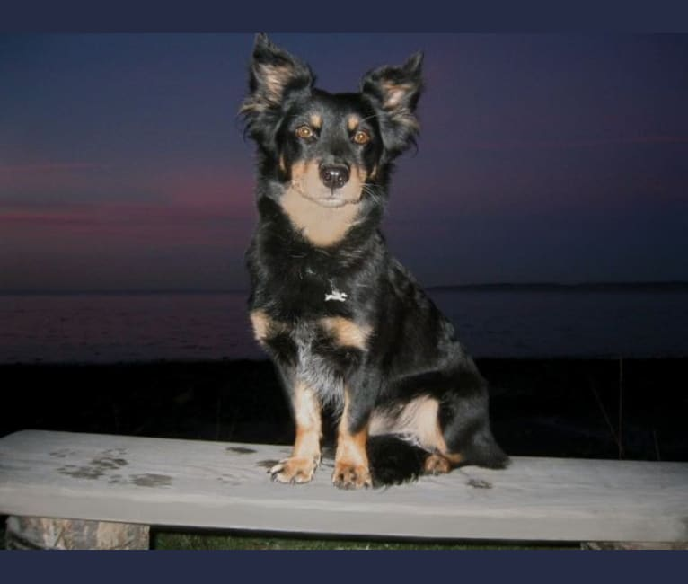 Photo of FrendL (The Fabulous & Occasionally Ferocious), a Rottweiler and German Shepherd Dog mix in Port Townsend, Washington, USA