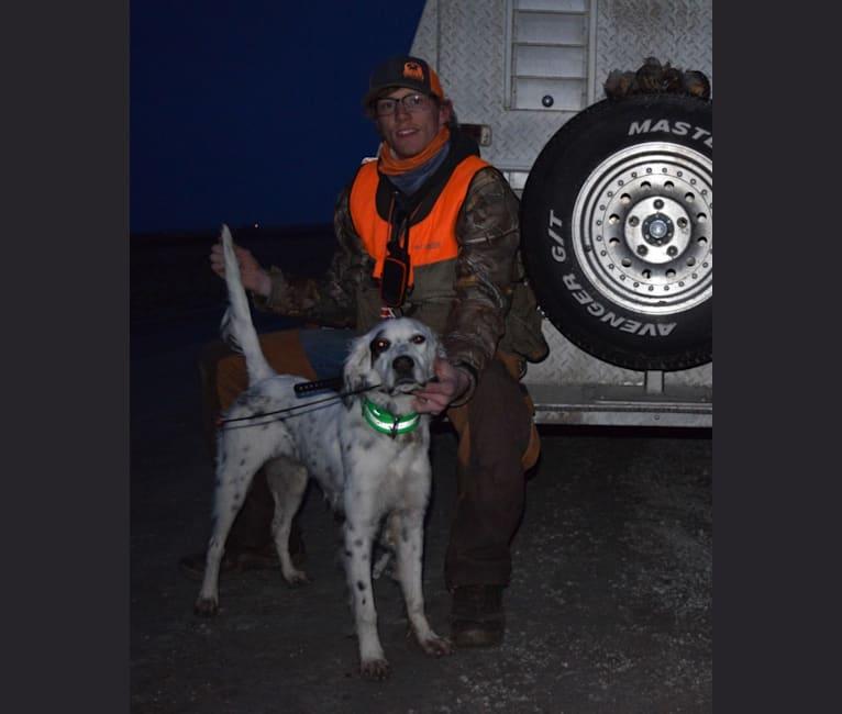 Photo of Grady, a Llewellin Setter  in Rittman, OH, USA