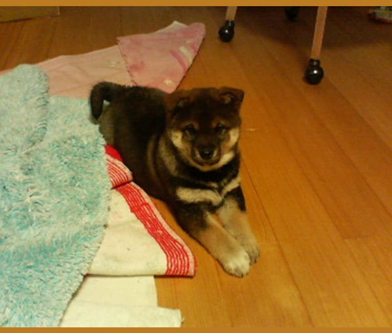 Photo of momo, a   in 日本