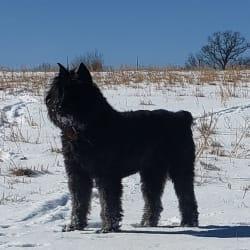 Black Bears Pride