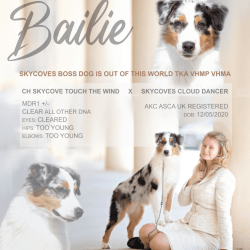 Bailie (Skyecoves Boss Dog is Out Of This World)