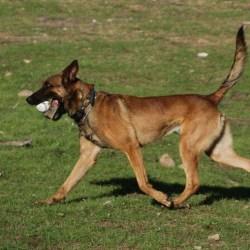 Dantero's Ares