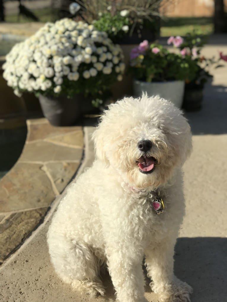 Photo of Libby, a Puli