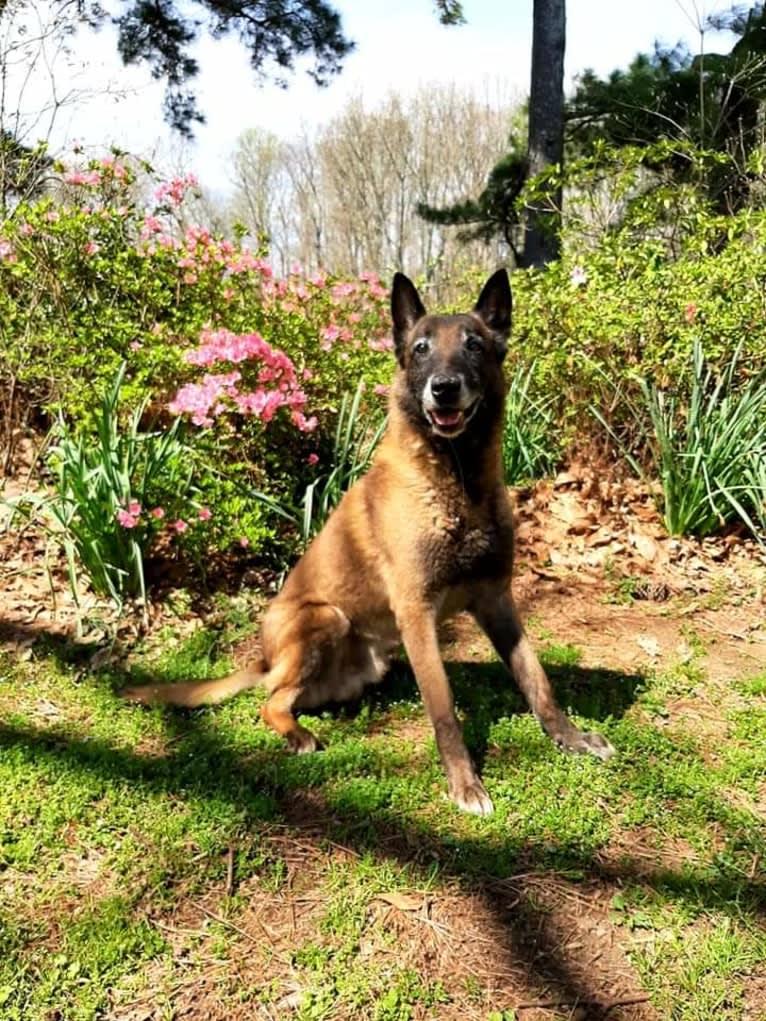 Photo of Eavan, a Belgian Shepherd  in France