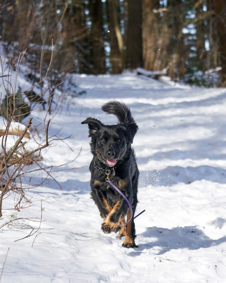 Photo of Lucy, a Labrador Retriever, Siberian Husky, American Pit Bull Terrier, and Boxer mix in Georgia, USA