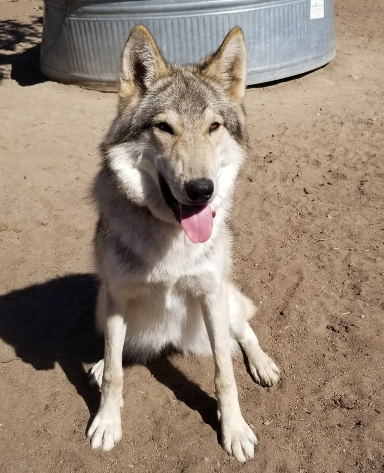 Photo of Akela, a