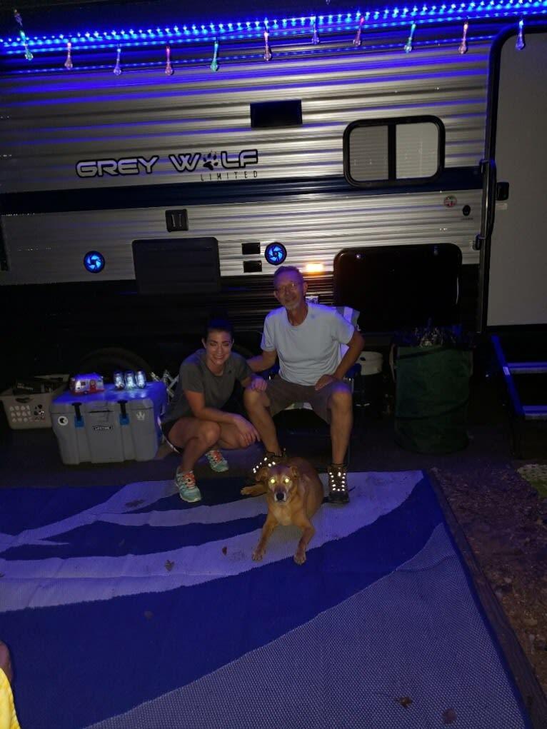 Photo of Riley, an Australian Cattle Dog, Labrador Retriever, and Cocker Spaniel mix in Missouri, USA