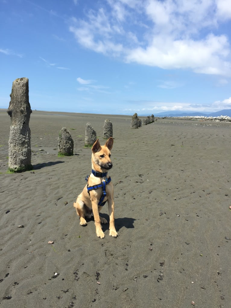 Photo of Oliver, a Formosan Mountain Dog  in Taiwan