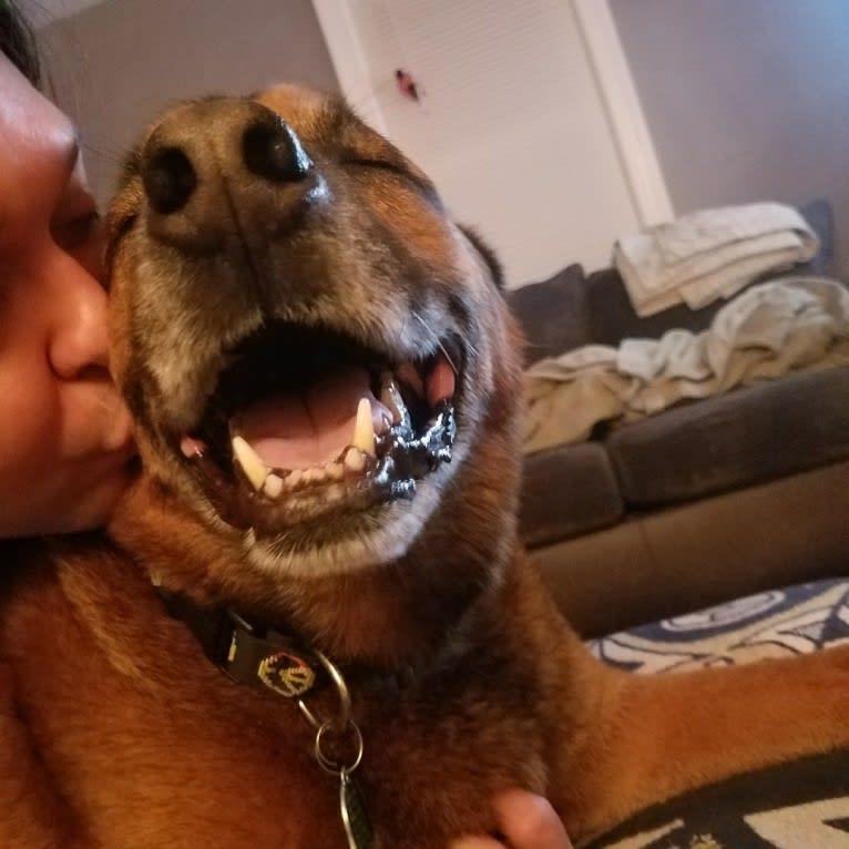 Photo of Tucker Hank Parker, a Boxer, Labrador Retriever, German Shepherd Dog, Rottweiler, and Mixed mix in Virginia Beach, Virginia, USA