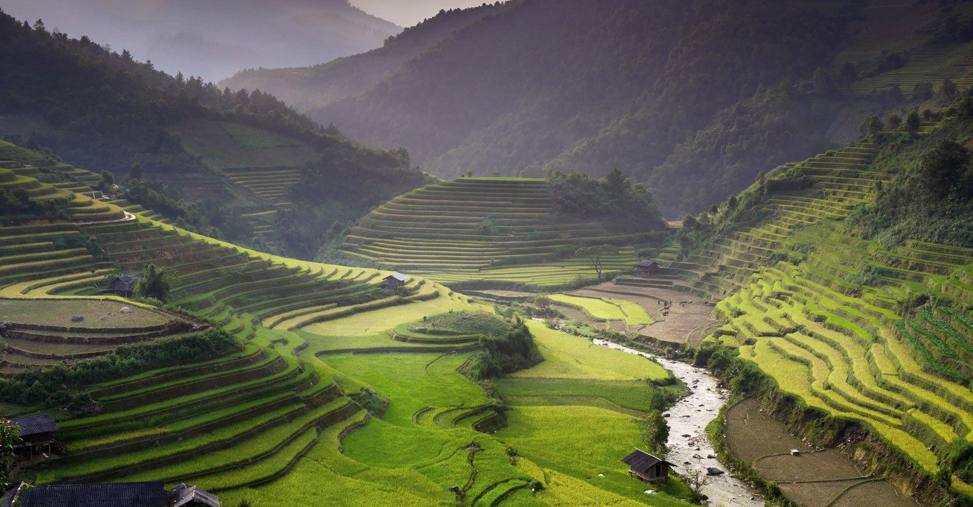 Rice Field in Vietnam Tour