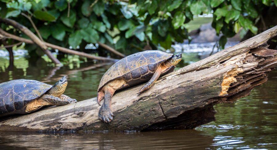 Enchanting Travels Costa Rica Tours Tortuguero National Park