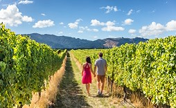 Enchanting Travels New Zealand Tours Vineyard Marlborough
