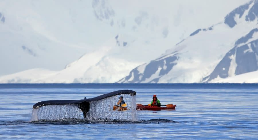 Humpback whale tail with a kayak in the background, Antarctica vacation