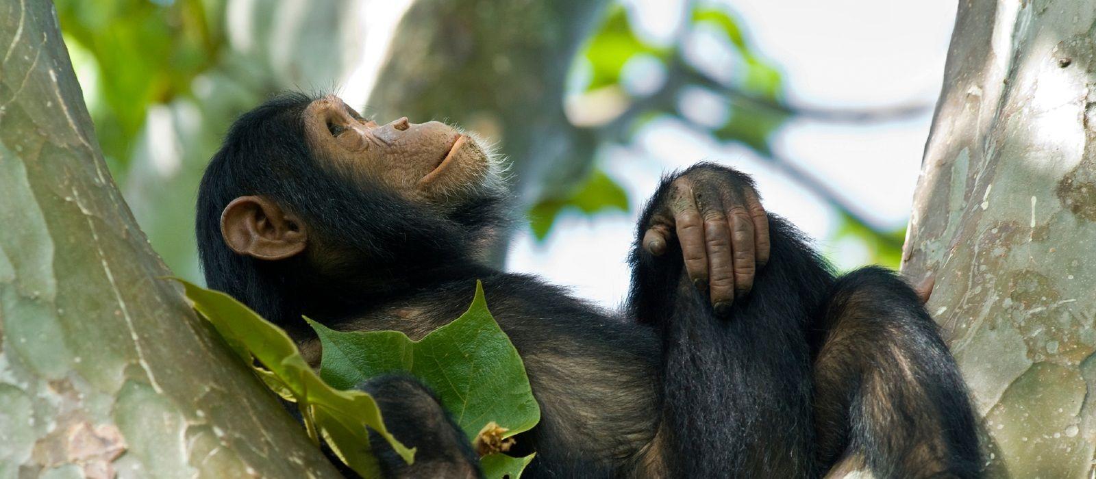 Gorilla Trekking in Rwanda Tour Trip 4