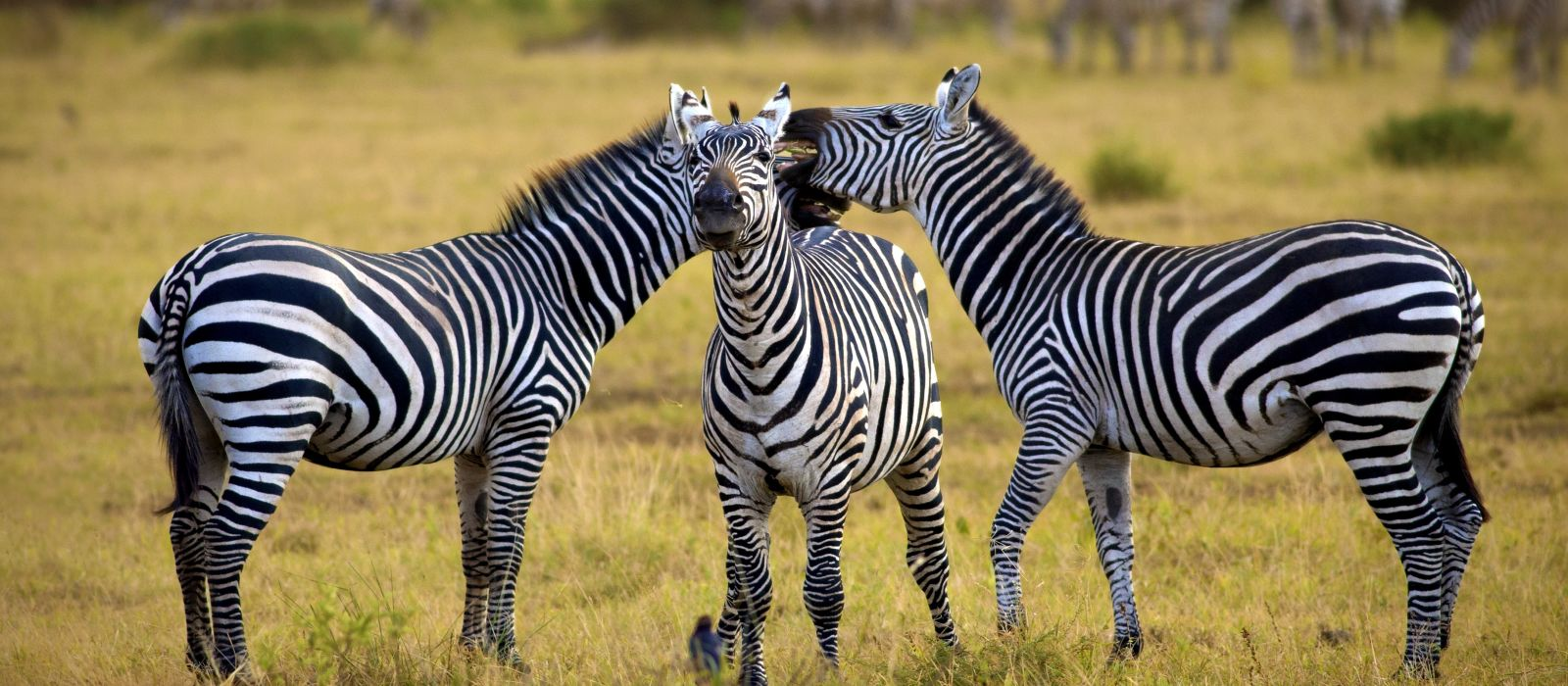 Tanzania: From Kilimanjaro to Zanzibar Tour Trip 2