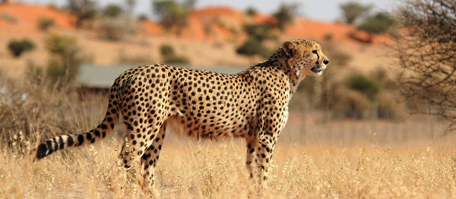 Namibia: Highlights of the North Tour Trip 6