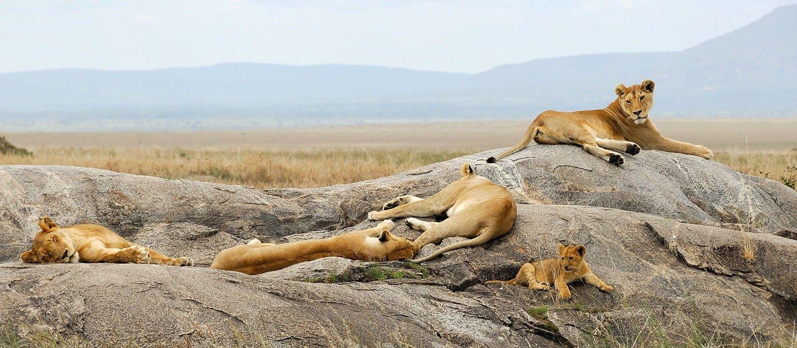 Lakeside Luxury, Wilderness and Wildlife in Tanzania Tour Trip 2
