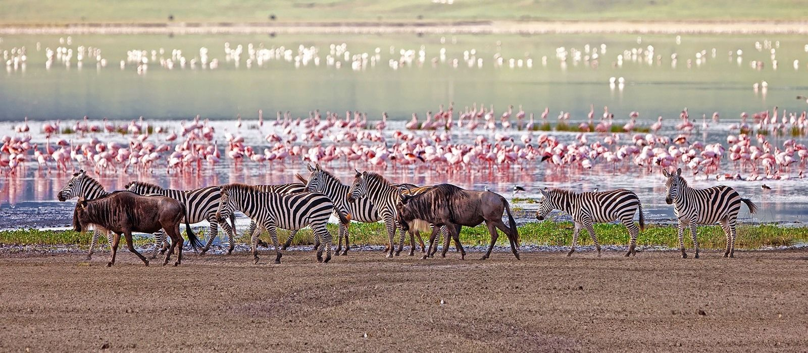 Lakeside Luxury, Wilderness and Wildlife in Tanzania Tour Trip 5