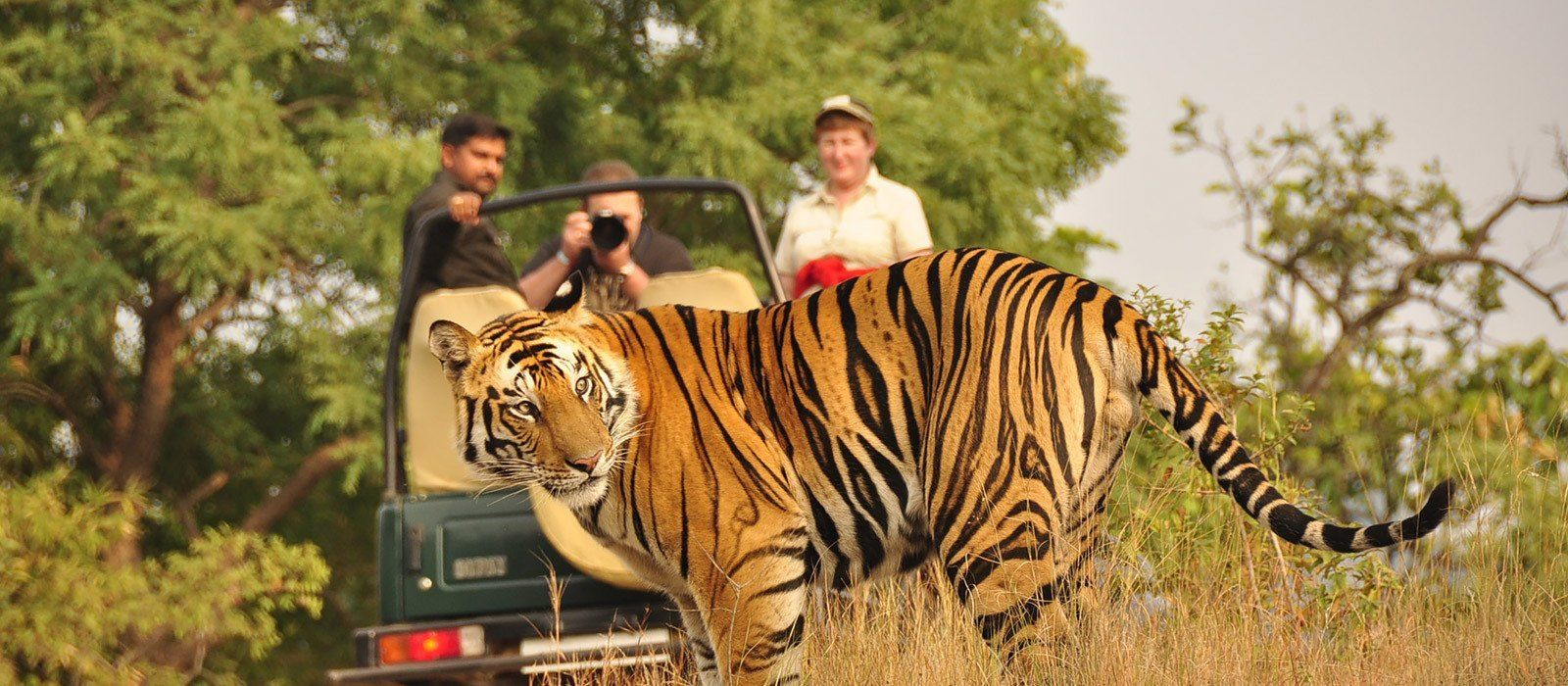 Destination Bandhavgarh North India