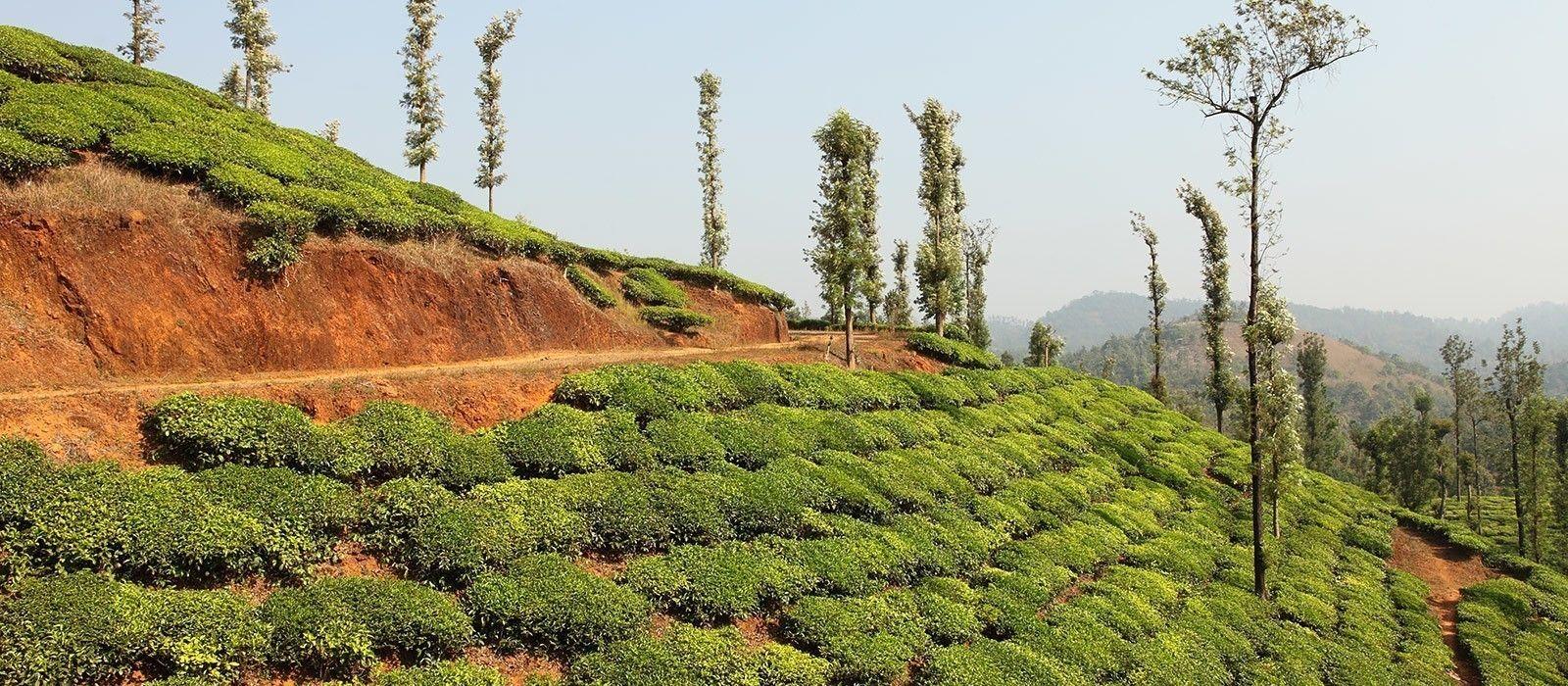 Große Südindienreise – Gewürze, Plantagen & Hausboot Urlaub 3