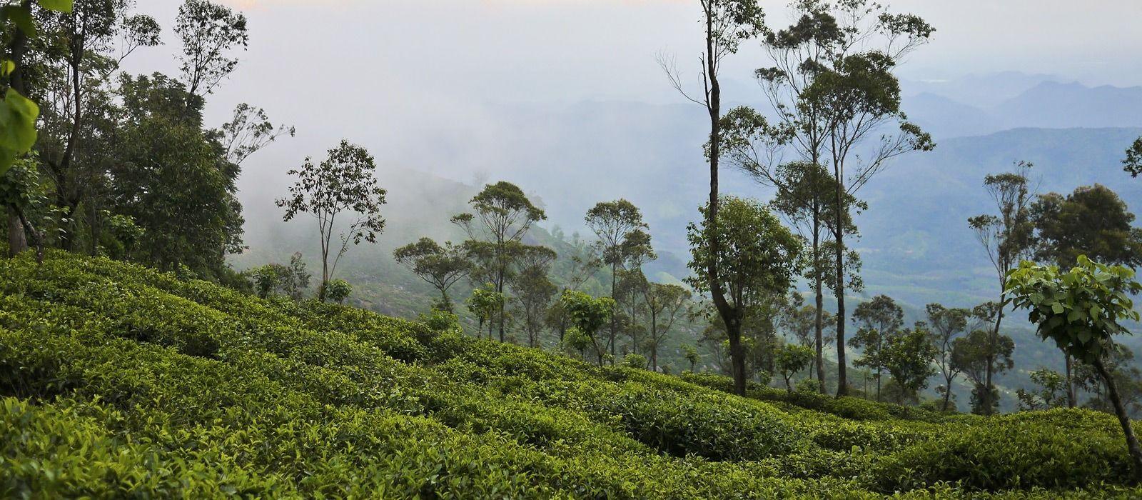 Destination Adam's Peak Sri Lanka