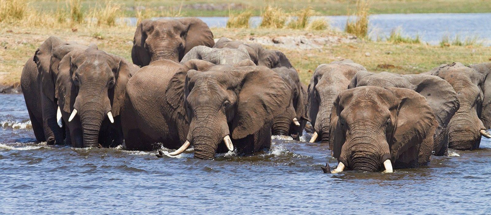 Simbabwe & Botswana: Majestätische Wasserwelten Urlaub 2