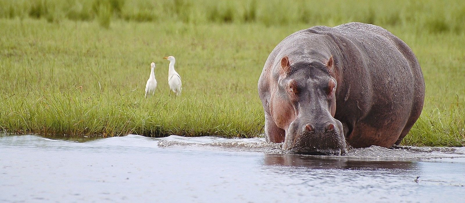 Destination Chobe National Park Botswana
