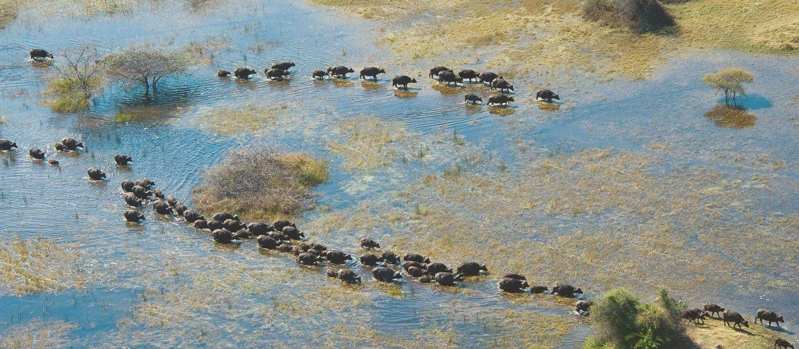 Botswana Tours & Trips