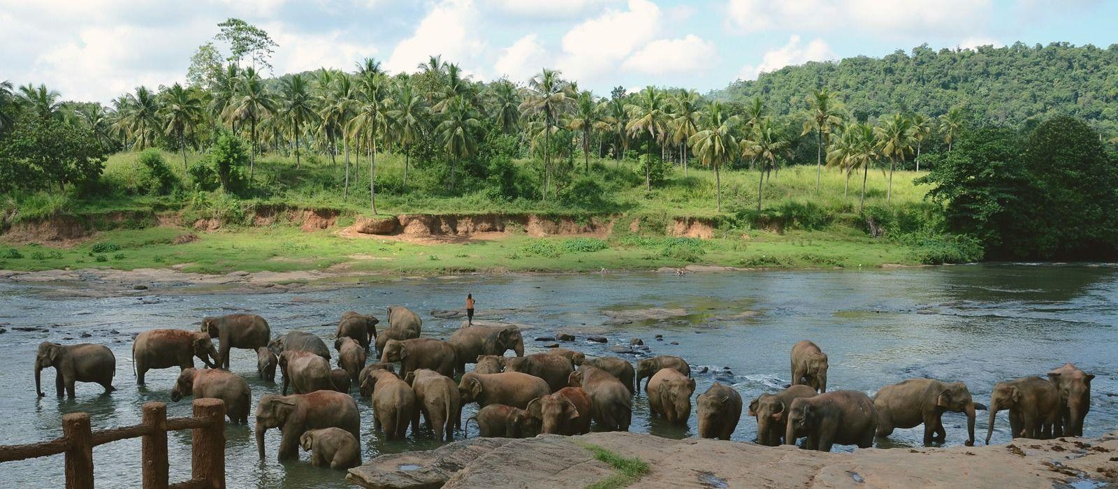 Sri Lanka Tours & Trips