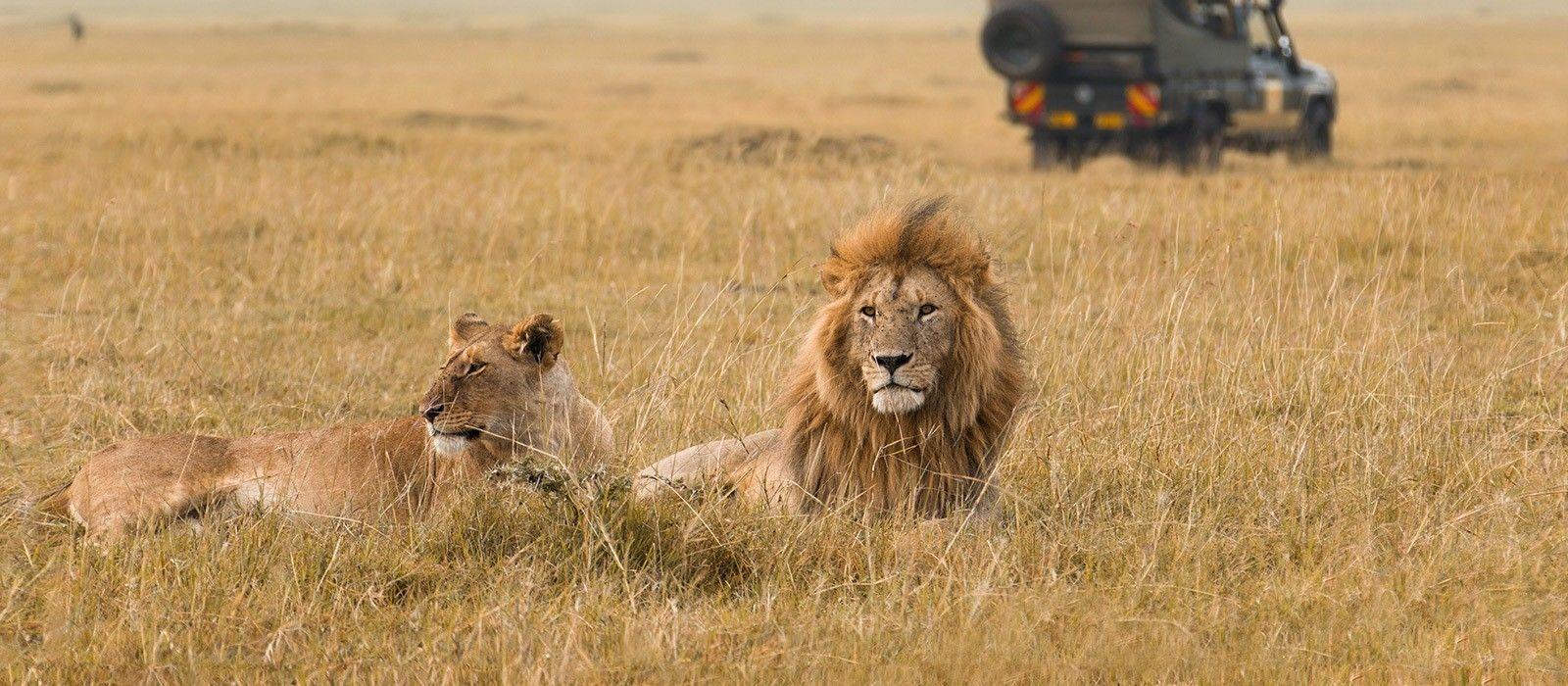 Kenia & Sansibar Reise: Safaris & Strände Urlaub 4