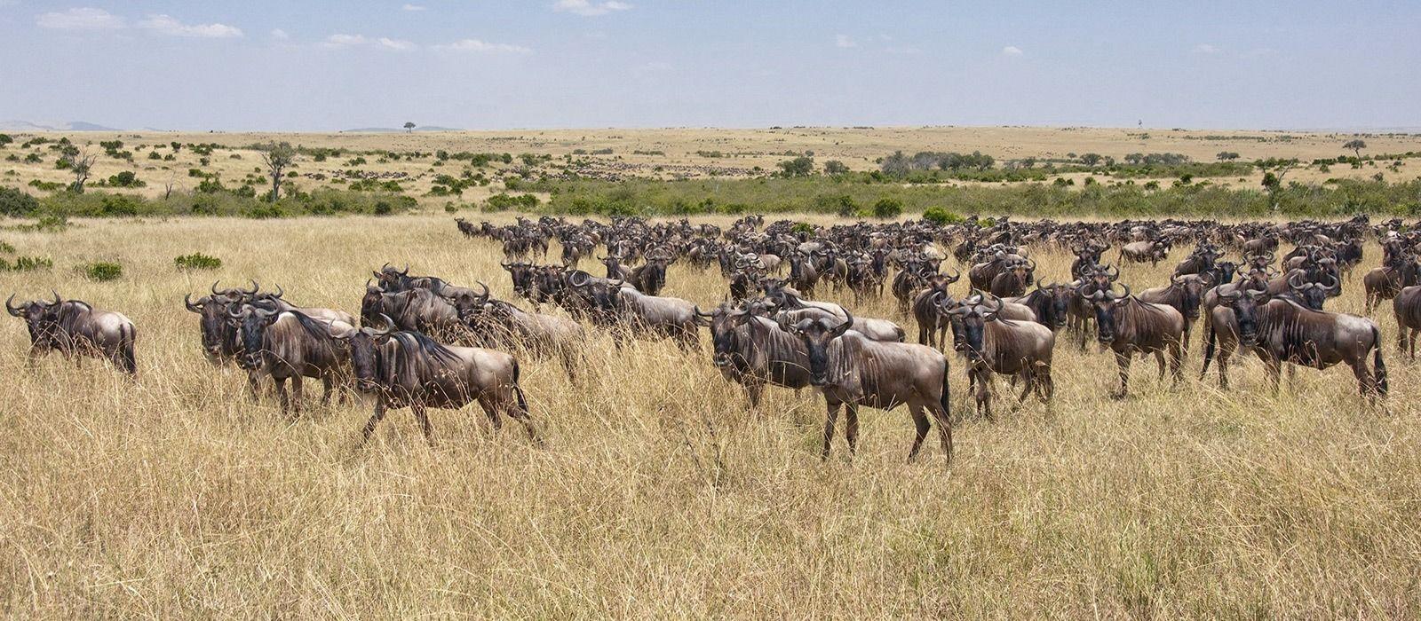 Kenia – Safari und Baden: Masai Mara & Traumstrände Urlaub 6