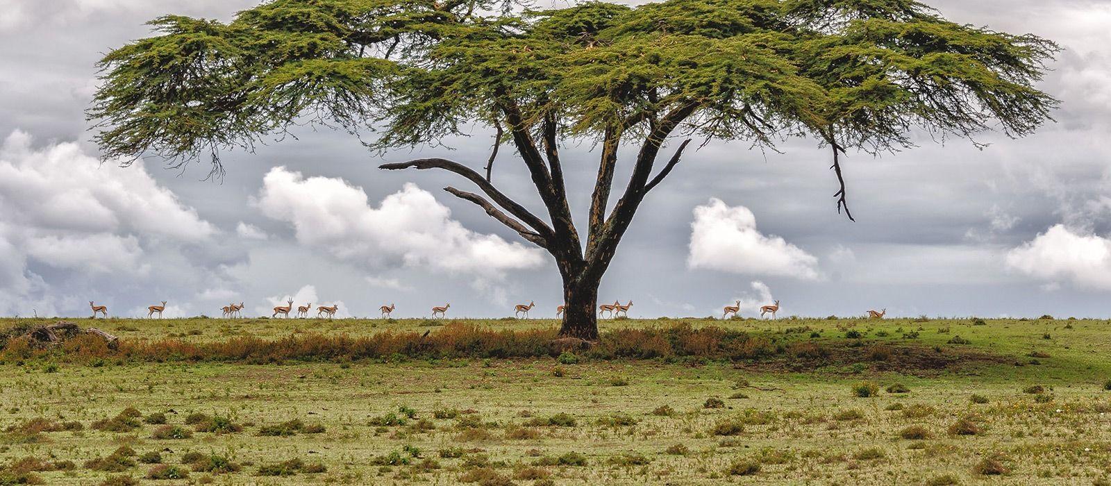 Kenia und Ruanda: Safari und Gorilla-Trekking Urlaub 2