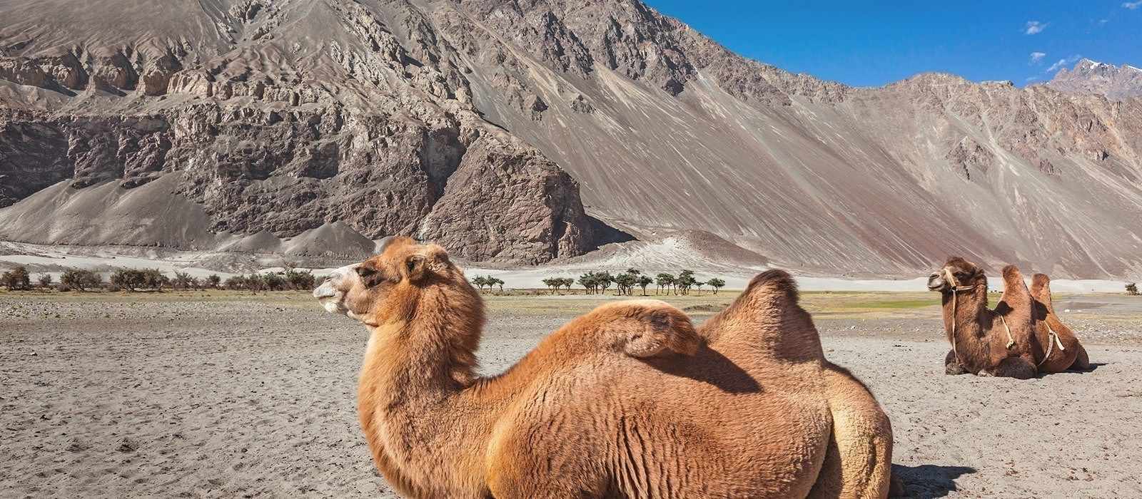 Luxurious North India and the Himalayas Tour Trip 6