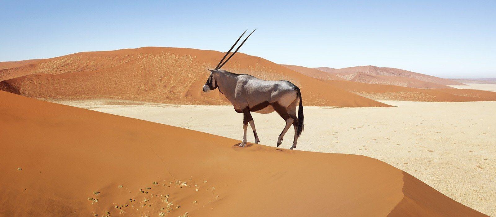Namibian Highlights, Safari and Waterfalls Tour Trip 2