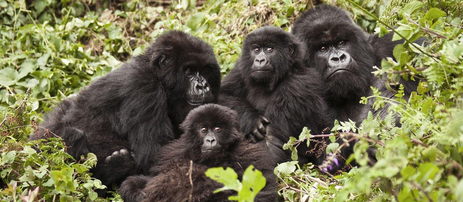 Kenya and Rwanda: Call of the Wild Tour Trip 1